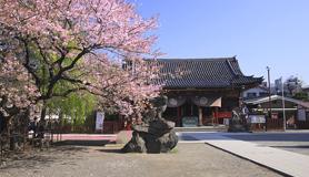 【さくら×浅草観光ステイ】心清まる朝のひとときを 浅草神社で朝拝体験 素泊り